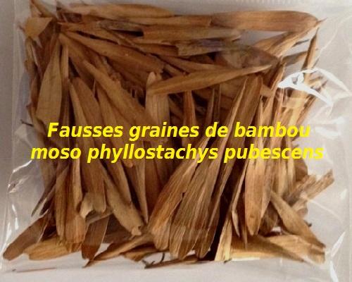 Fausses graines de bambou moso phyllostachys pubescens