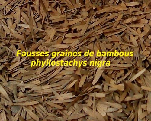 Fausses graines de phyllostachys nigra