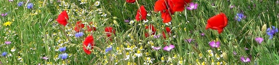 Vente de graines rares et semences pour le jardin for Vente de fleurs par correspondance