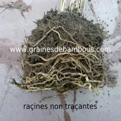 racines-non-tracantes.jpg