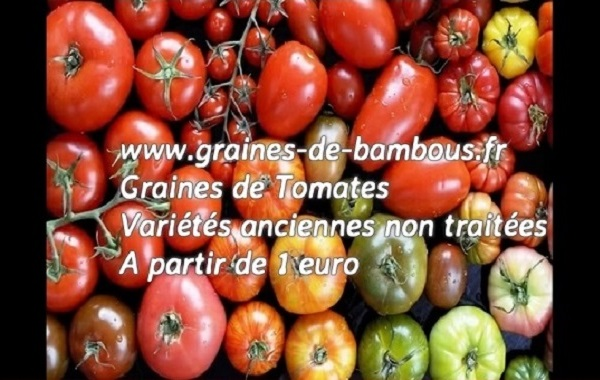 Tomate anciennes