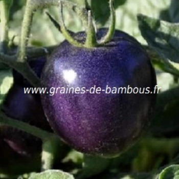 tomate indigo rose bleue graines de tomato seeds. Black Bedroom Furniture Sets. Home Design Ideas