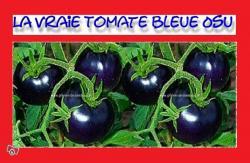 tomates-bleues-osu.jpg