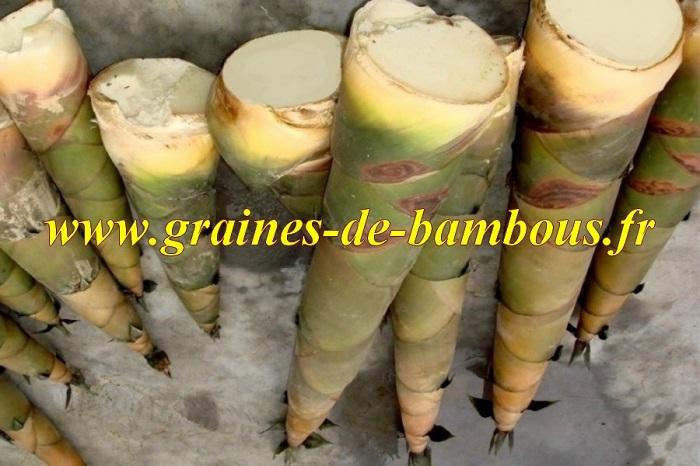 Turions de bambou moso phyllostachys edulis recette 1