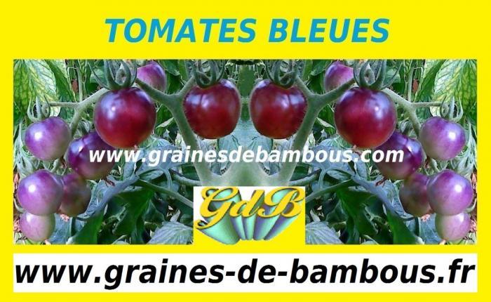 www-grainesdebambous-com-www-graines-de-bambous-fr.jpg