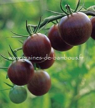 Tomate Brown Berry Réf.821