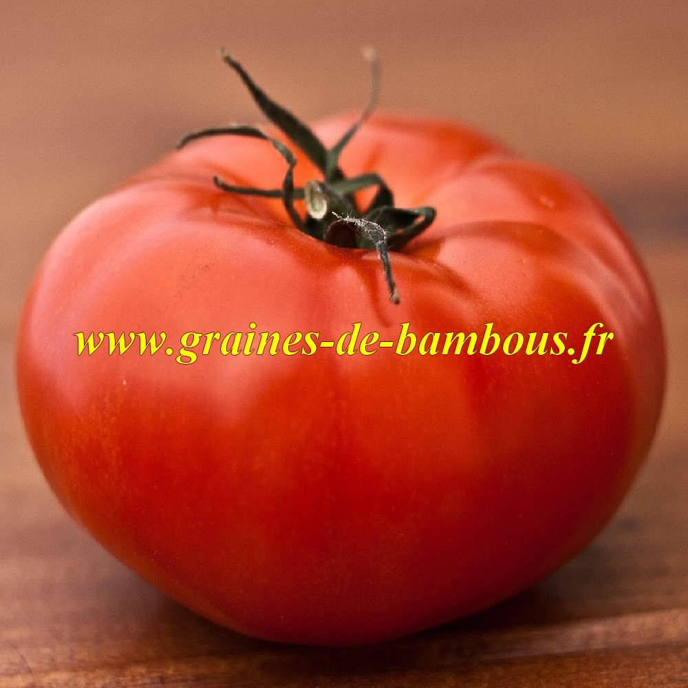 Ace 55 vf tomate graines