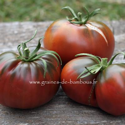 Tomate Paul Robeson Réf.824