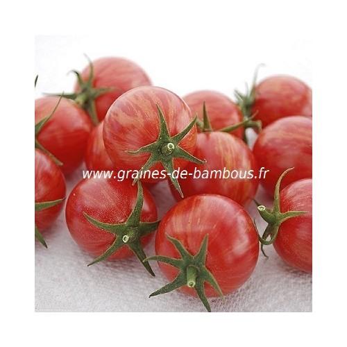 Artisan pink bumble bee graines de tomate
