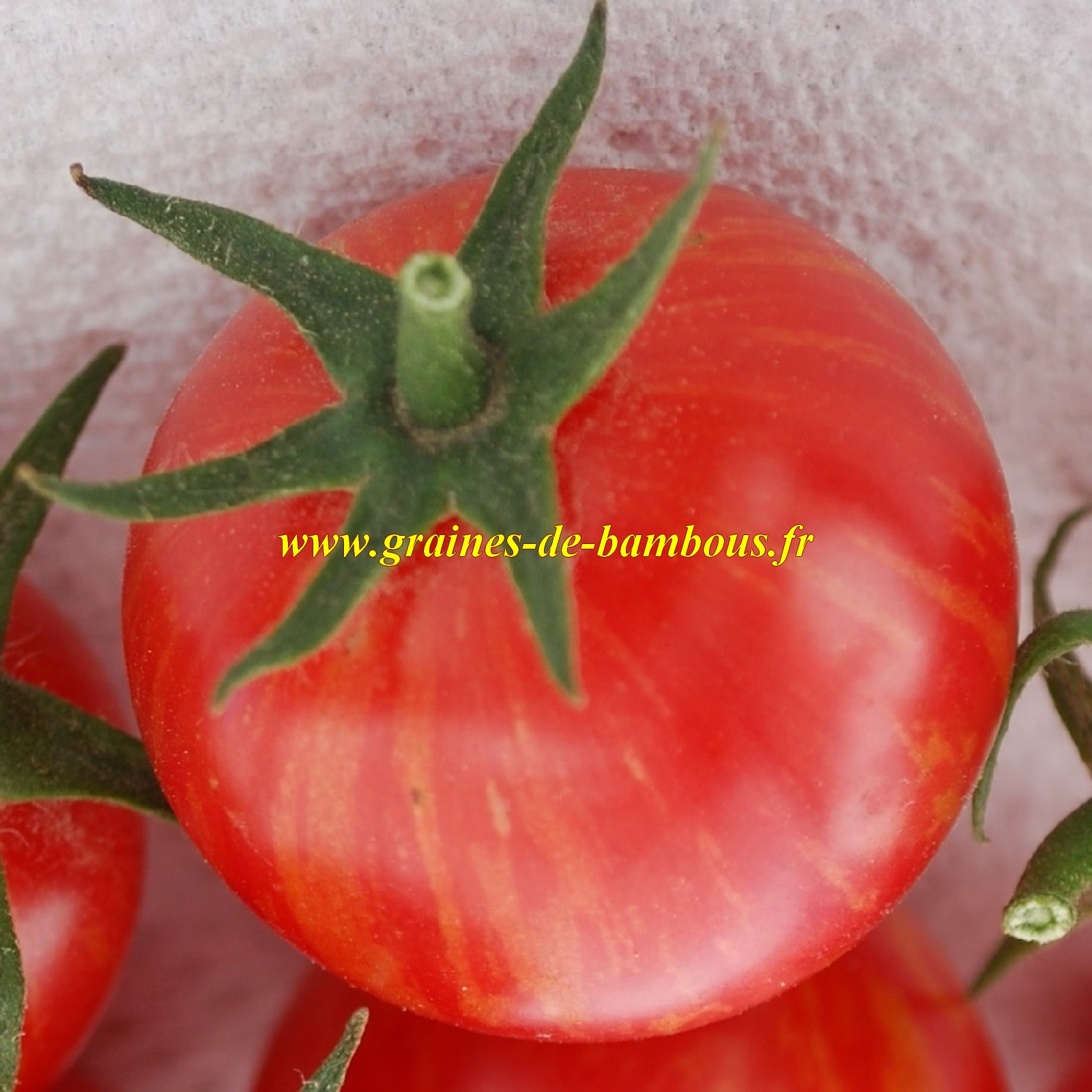 Artisan pink bumble bee tomato seeds