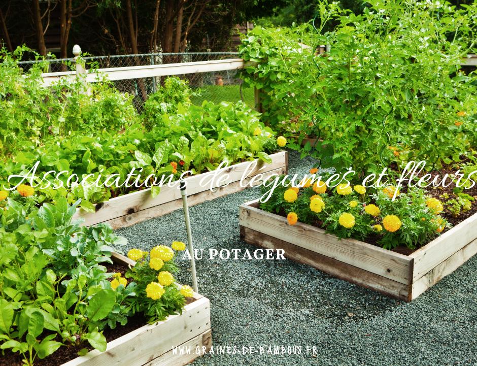 Associations de legumes et fleurs au potager 1