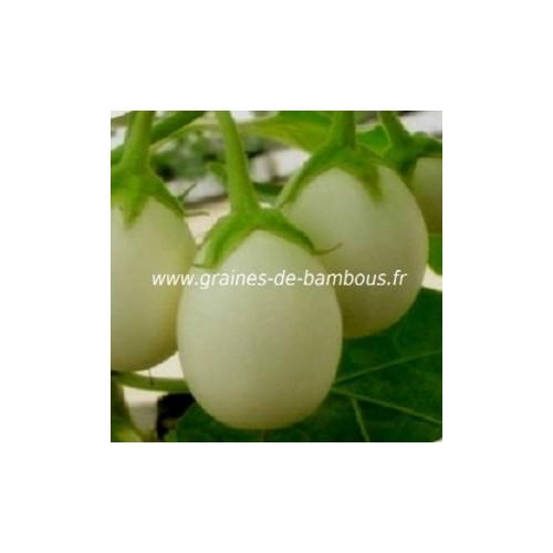 Aubergine blanche ronde a oeuf graines de bambous fr