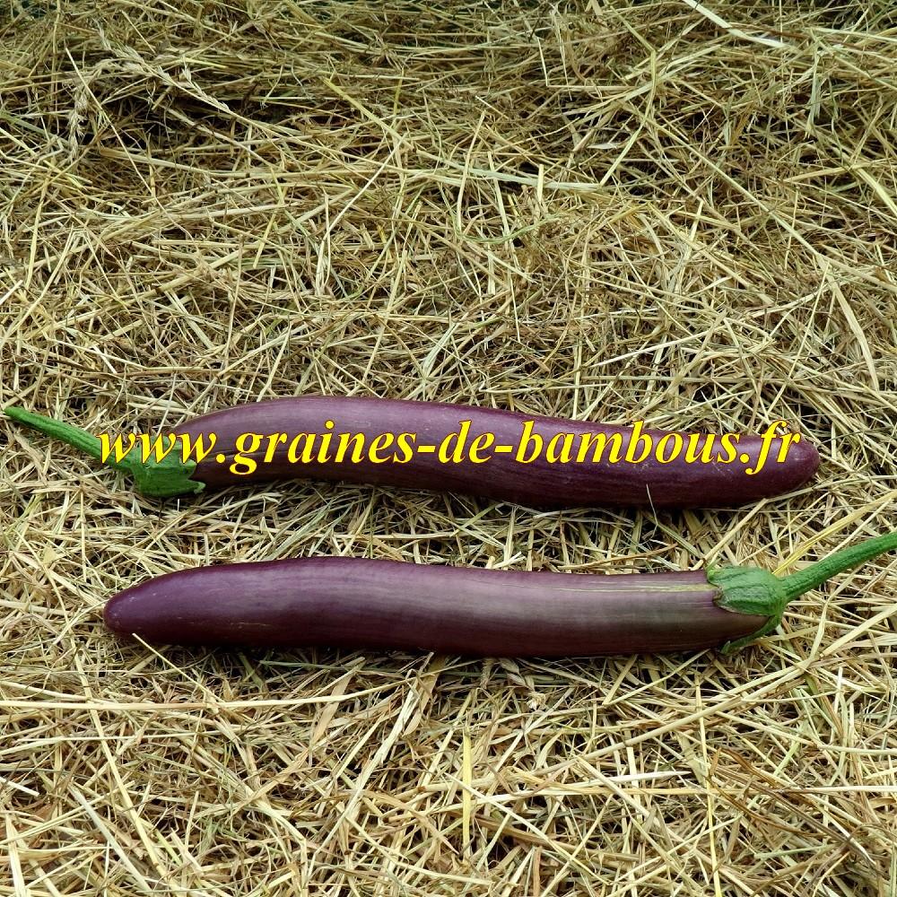 Aubergine long purple sur notre site graines de bambous fr