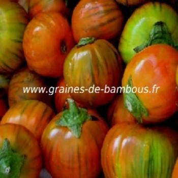 aubergine-turc-orange-www-graines-de-bambous-fr-1.jpg