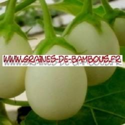 Aubergine blanche ronde ''à oeuf '' white Egg 1000 graines