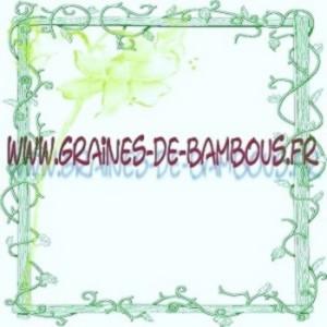 Bamboo seeds dendrocalamus hamiltonii graines de bambous