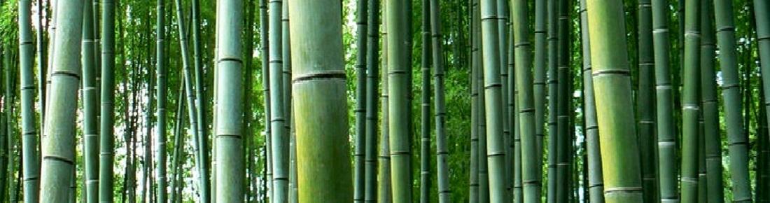 graines de bambous g ants rustiques et exotiques. Black Bedroom Furniture Sets. Home Design Ideas