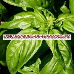 Basilic grand vert 10000 graines