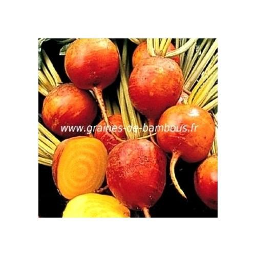 Betterave burpee s jaune graines de bambous eu