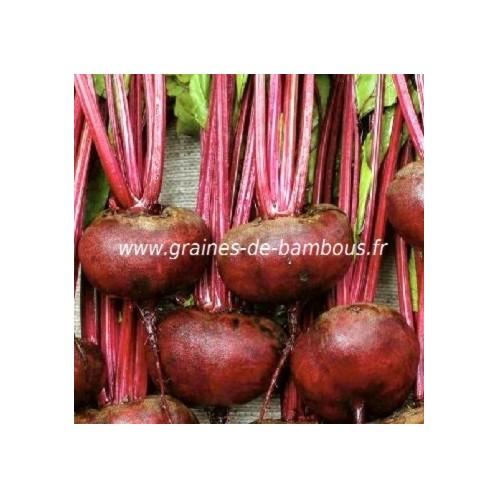 Betterave plate d egypte graines potageres et legumes