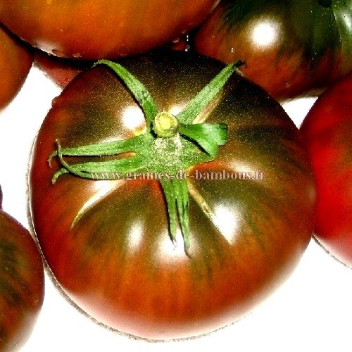 Black from tula tomate