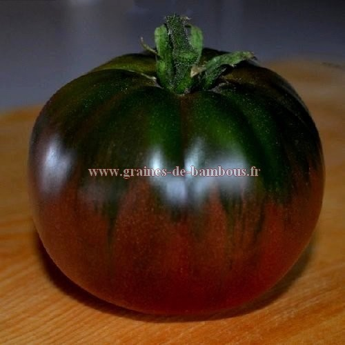Black russian graines de tomate
