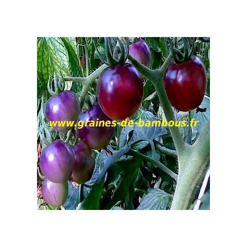 Bleu p20 tomate osu graines