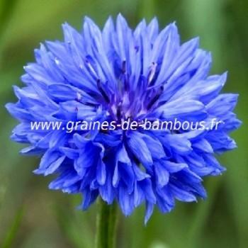 Bleuet double bleu graines de bambous fr