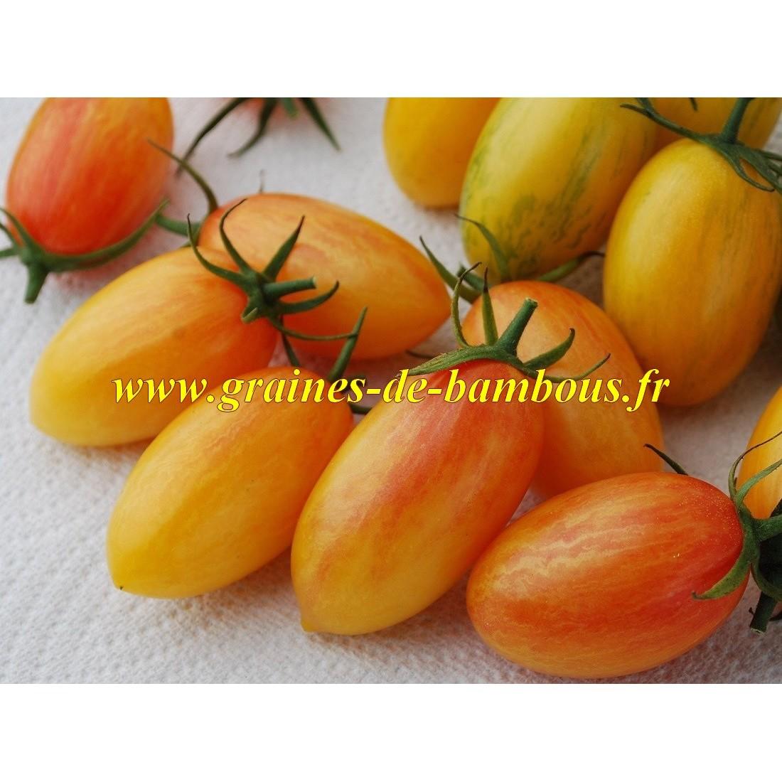 Blush tiger graines de tomate