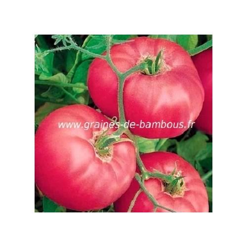 Brandywine pink graines de bambous fr