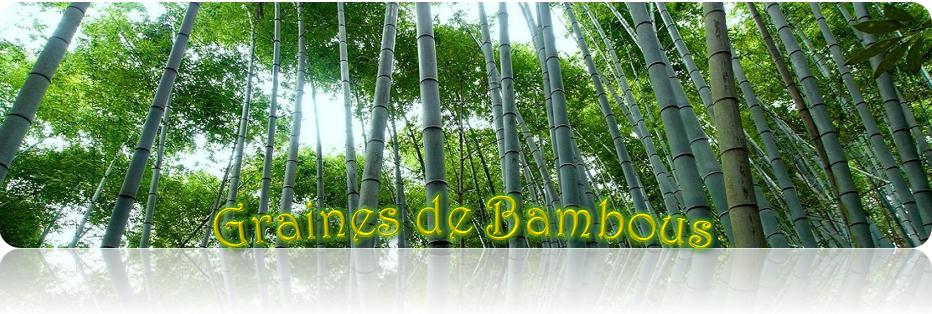 https://www.graines-de-bambous.fr/