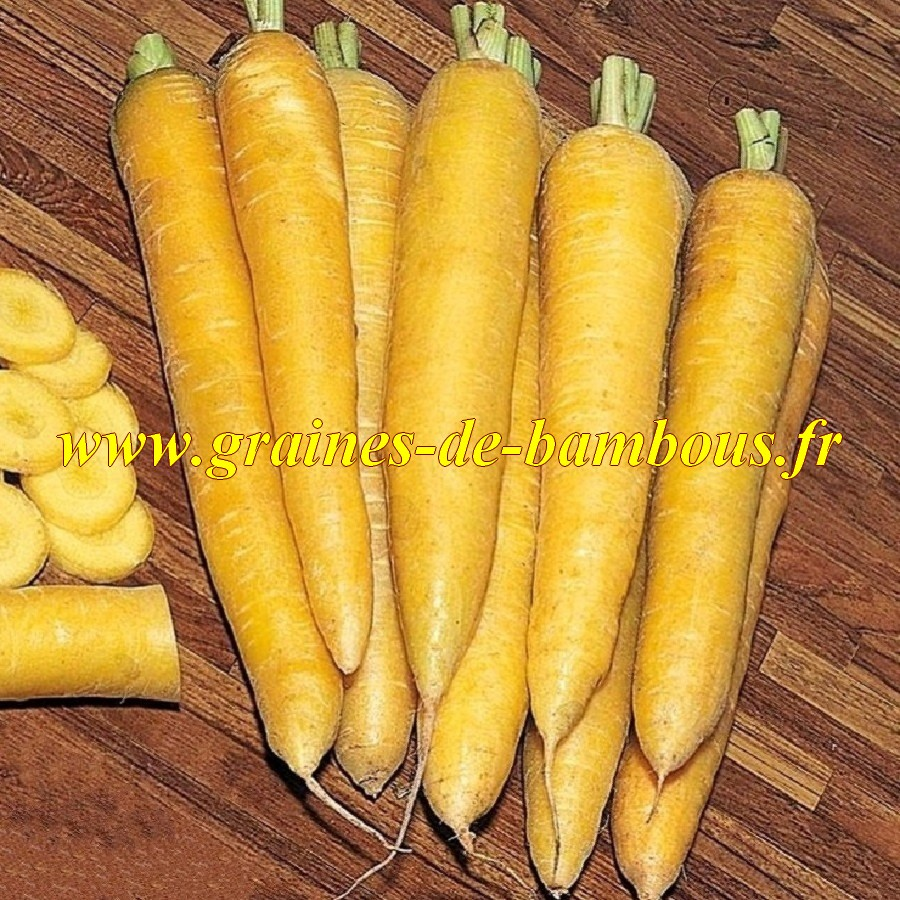 Carotte jaune du doubs legume racine