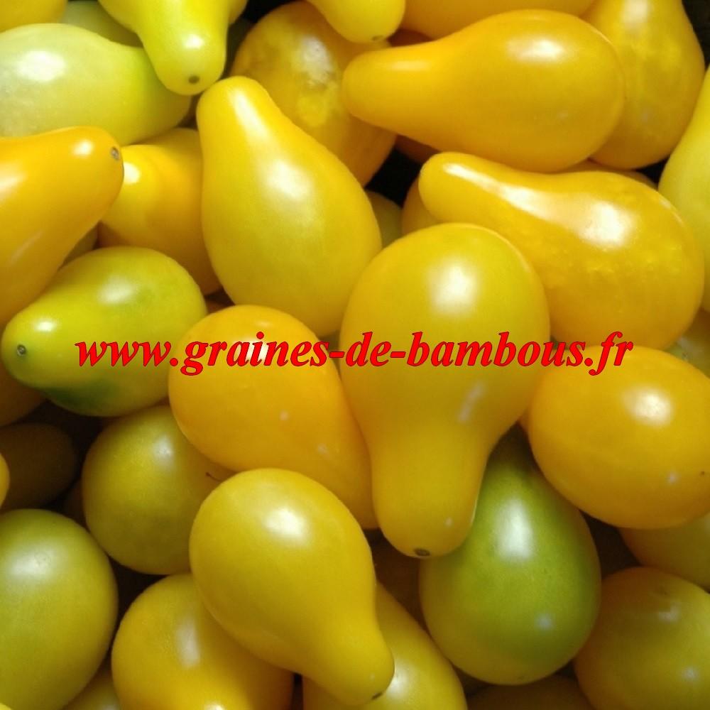 Cerise poire jaune semences de tomate