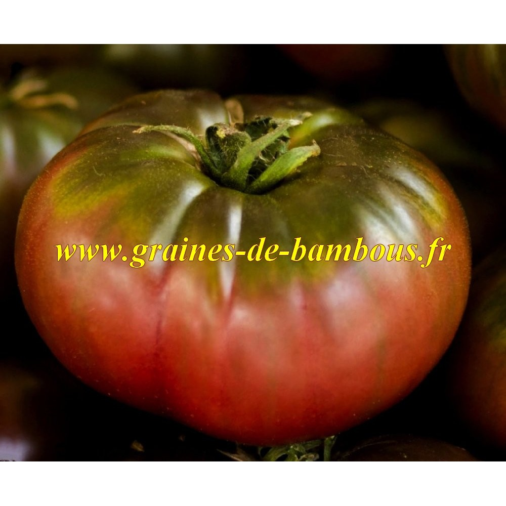 Cherokee purple graines de tomate