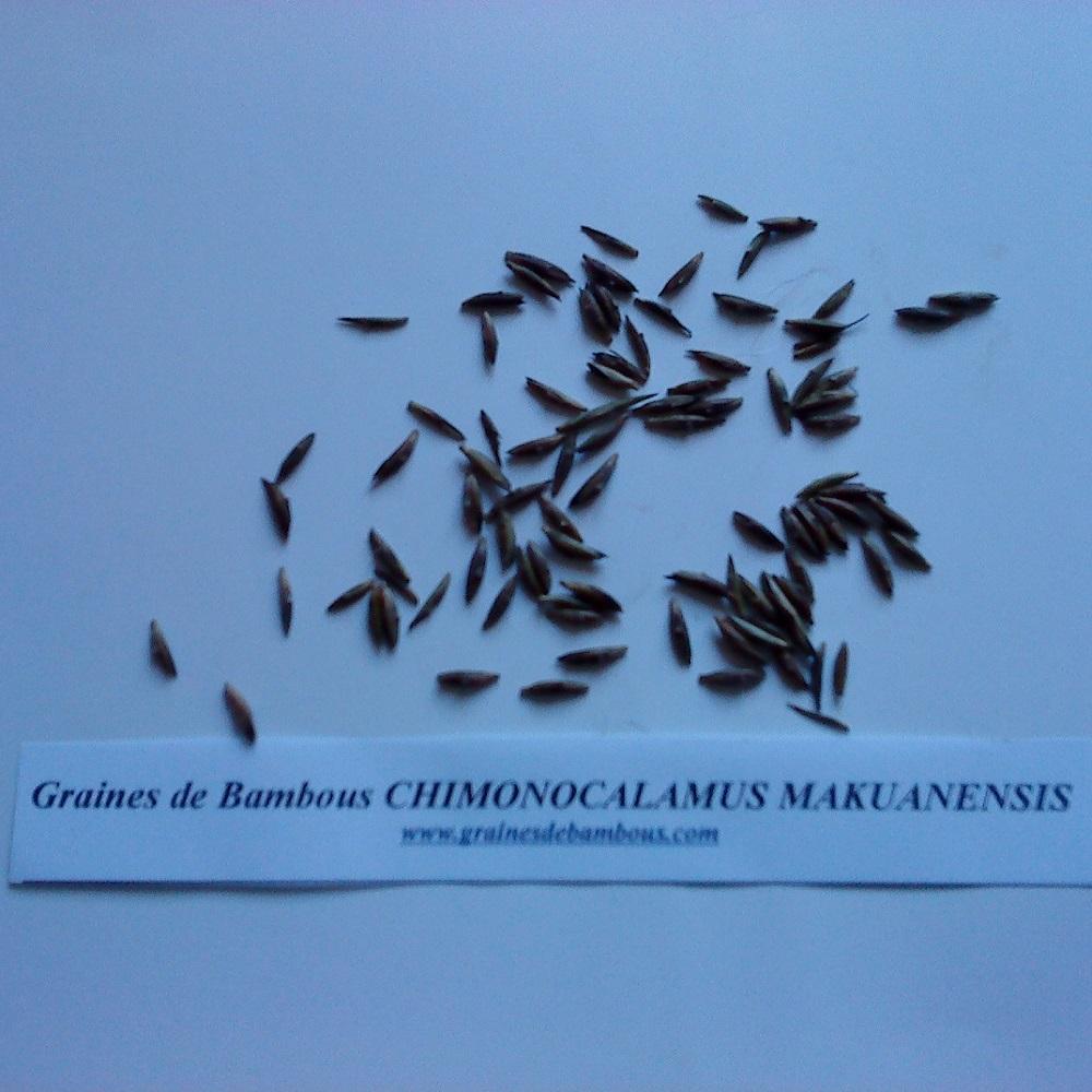 chimonocalamus-makuanensis-www-graines-de-bambous-fr.jpg