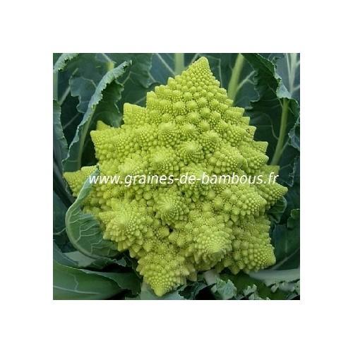 Chou fleur vert romanesco graines de bambous fr