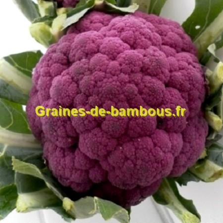 Graines De Chou Fleur Violet De Sicile