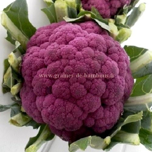 Chou fleur violet de Sicile réf.771