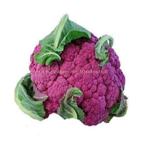 Chou fleur violet graines