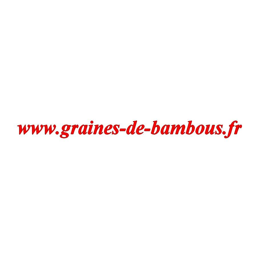 Chou rave graines de bambous fr