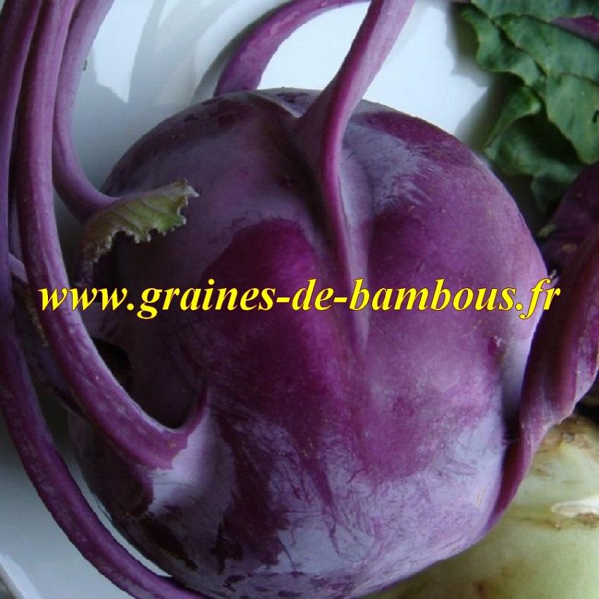 Chou rave violet graines