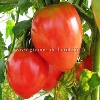 Coeur de boeuf graines tomate