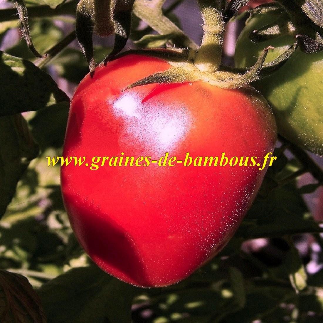 Coeur de boeuf semences tomate
