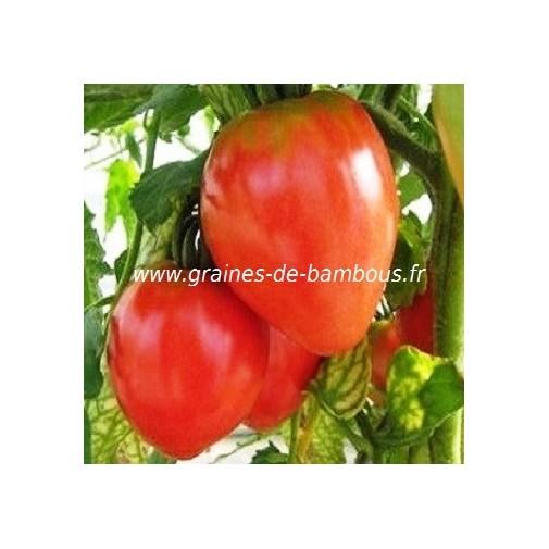 Coeur de boeuf tomate graines de bambous eu