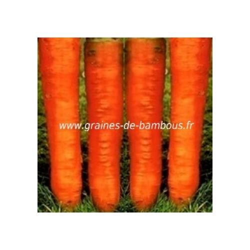Colmar carotte graines de bambous fr