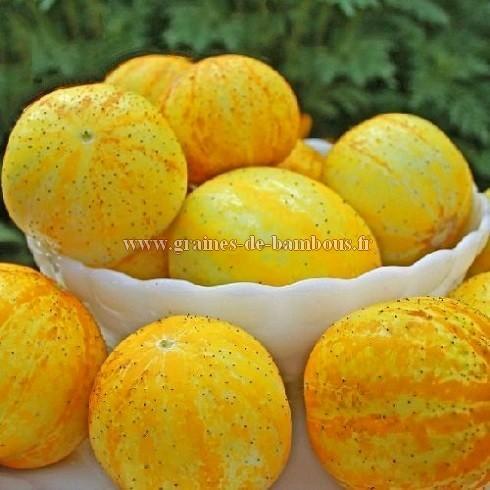 Concombre Lemon Apple réf.440