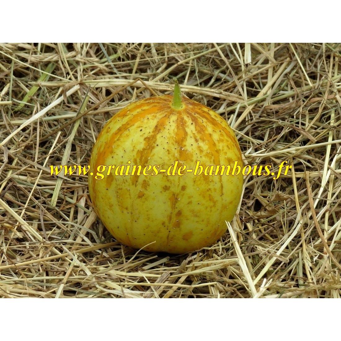 Concombre rond jaune graines