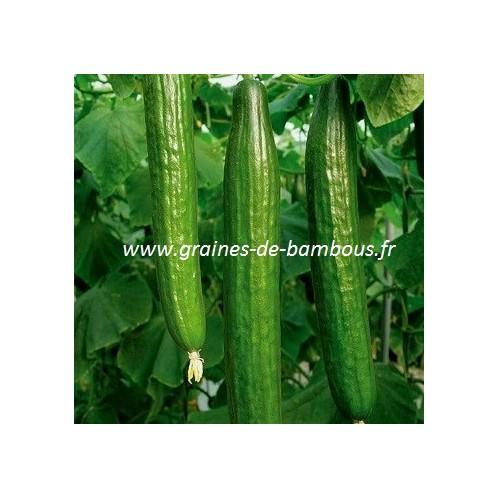 Concombre variete vert long de chine