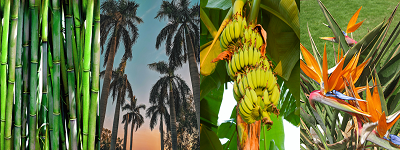 Conseils bambou palmier bananier oiseaux