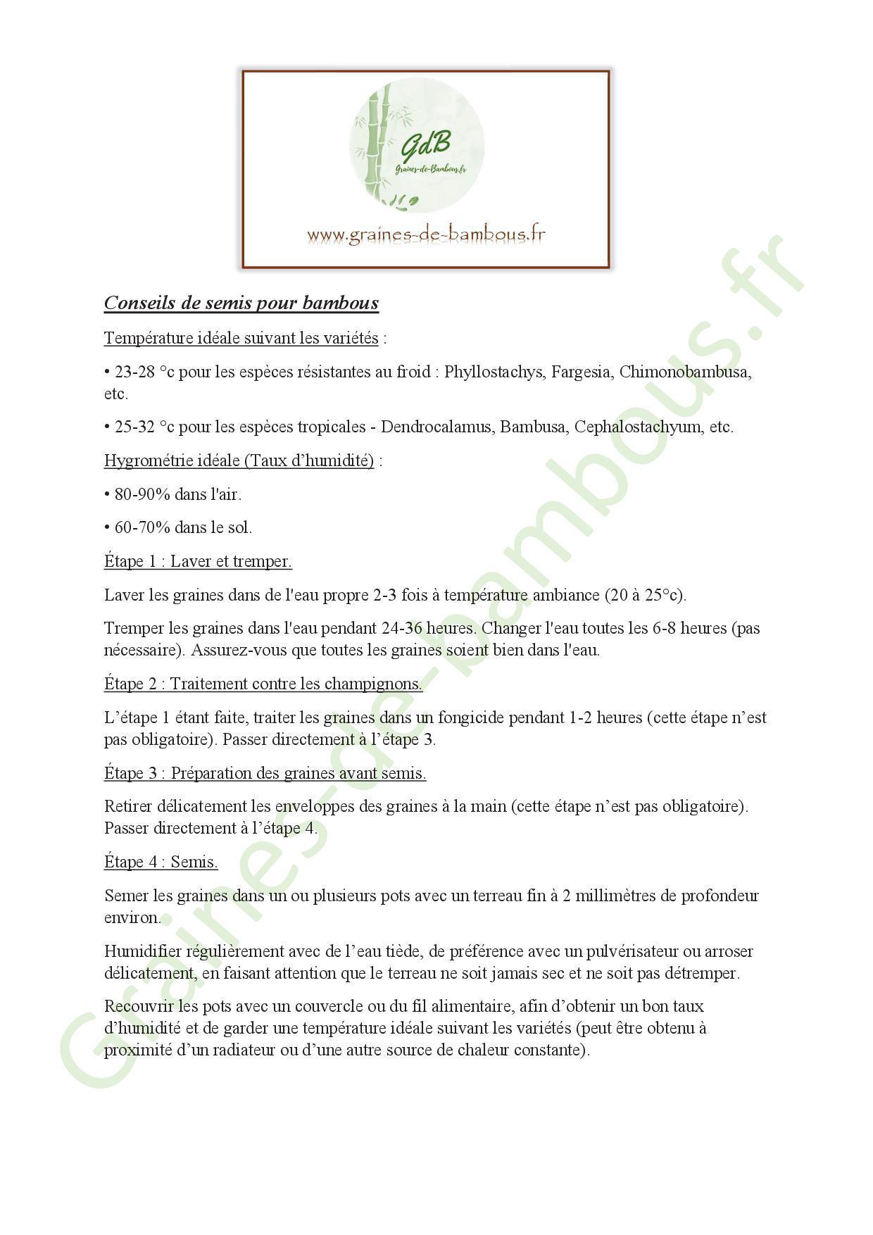 Conseils de semis pour bambous 20201